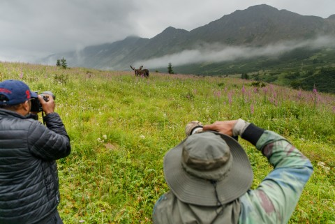 Jeff Schultz Moose Viewing Powerline pass 190712 5 F1003