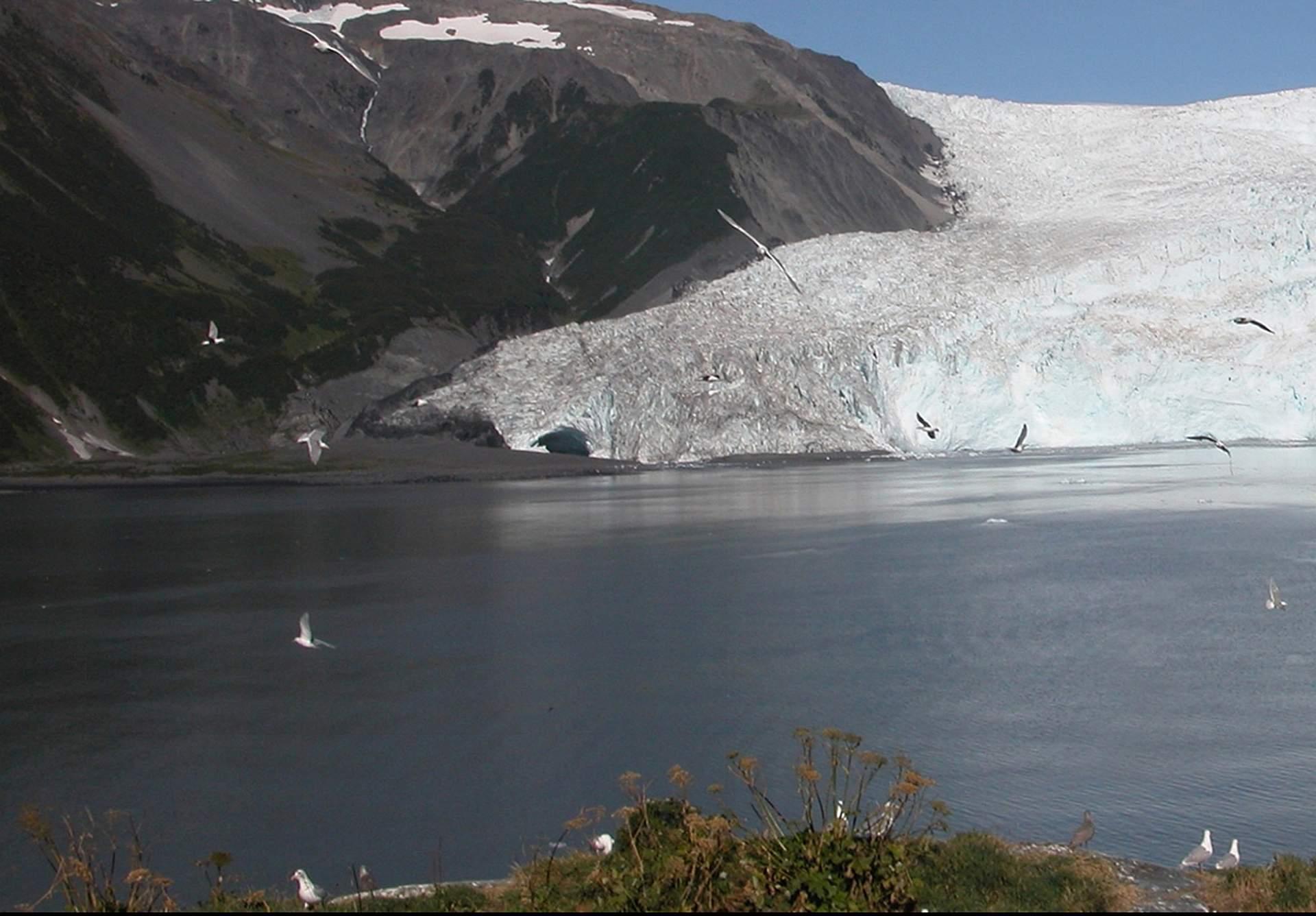 Bruce Molnia Glacier Photos Aialik Glacier View1 2005