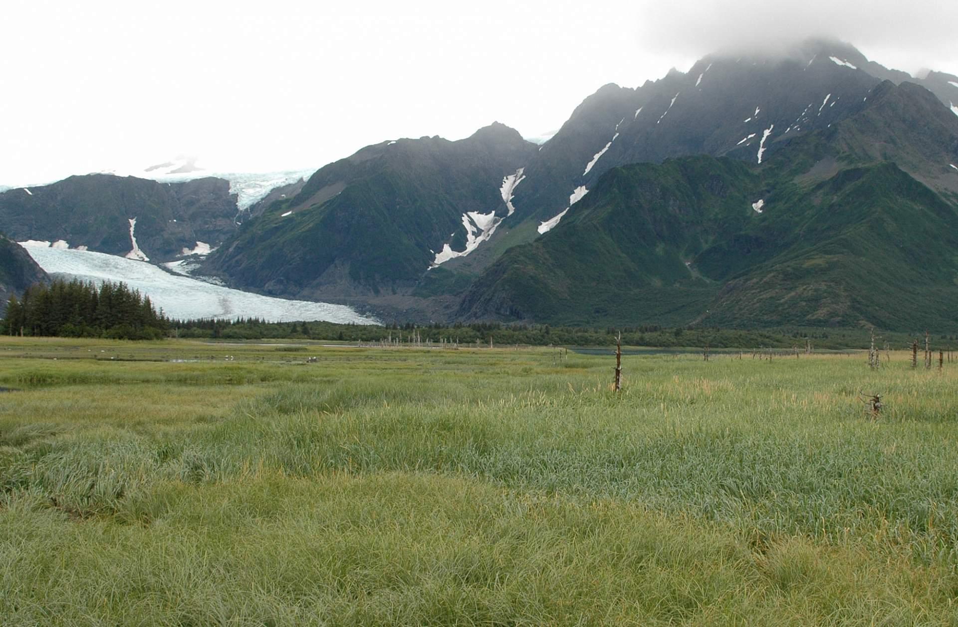 Bruce Molnia Glacier Photos Pedersen Glacier View2 2005