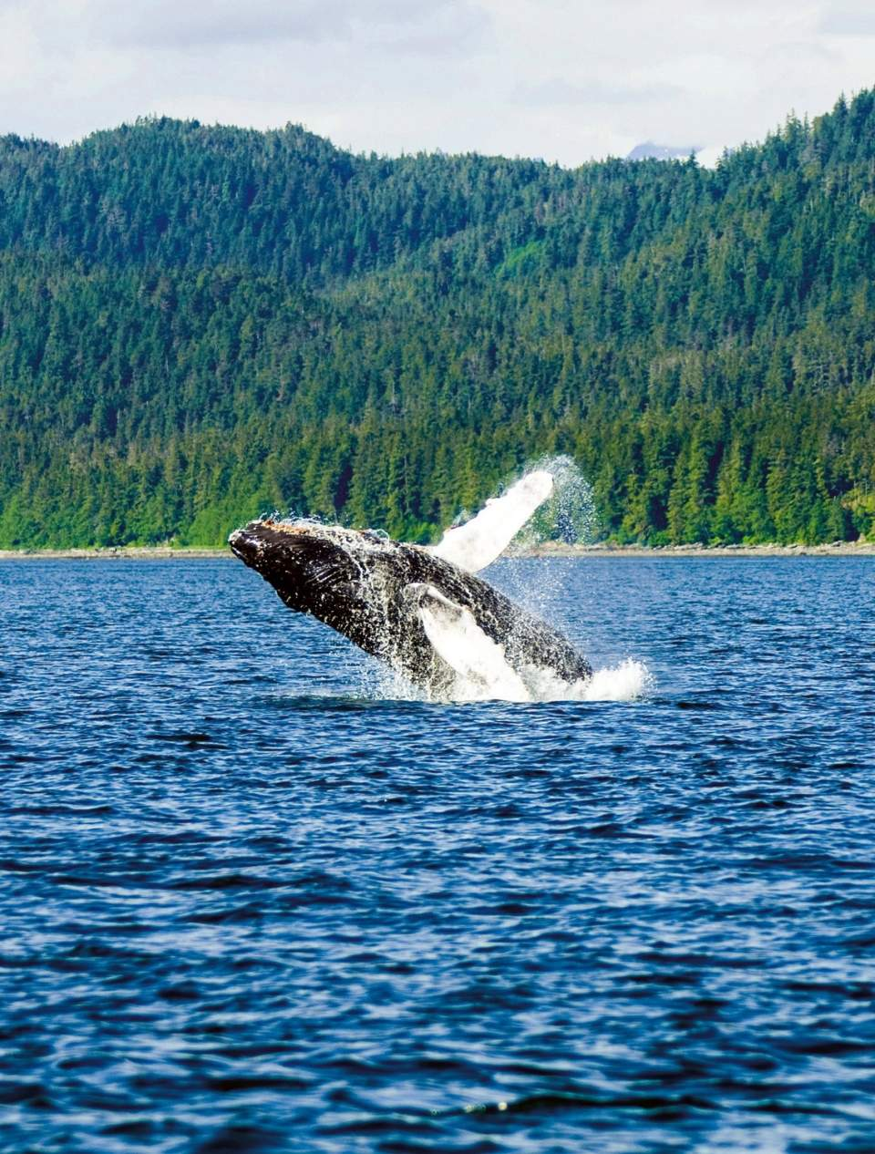 Alaska travel adventure breaching whale why your should visit alaska in 2021 1