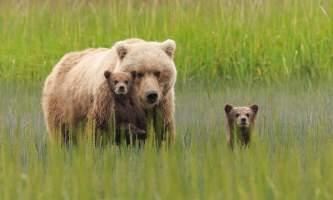 Alaska Bear Viewing Tours Pattie Walsh DX 4504