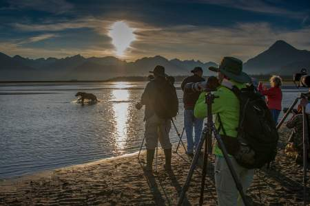 Alaska photo workshops tours alaska bearcamp photographers bear