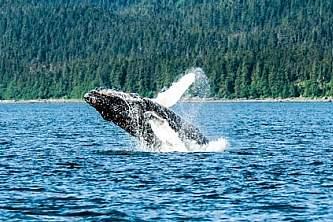 Alaska whale watching tours Juneau Cruise 1
