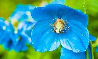 Alaska gardens arboretums Botanical Gardens 0234 Alaska Channel
