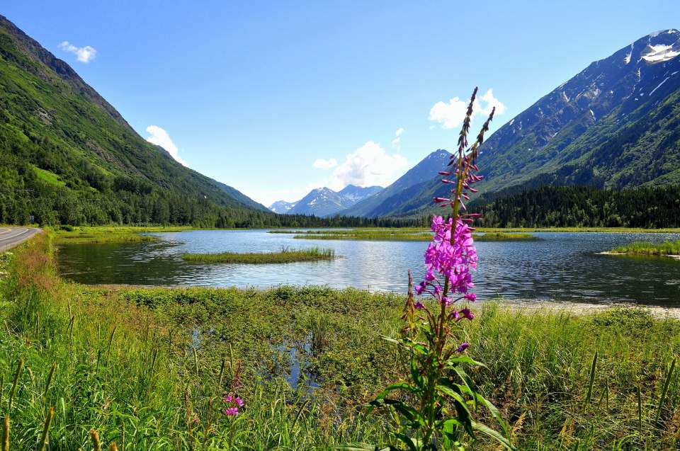 A sprig of fireweed next to a lake with mountains in the background