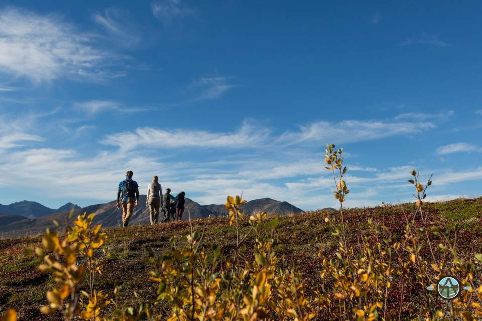 A group of people hike across the tundra in Denali National Park