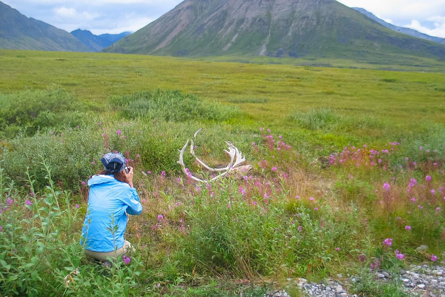 Someone kneels in the Alaskan tundra to photograph fallen antlers
