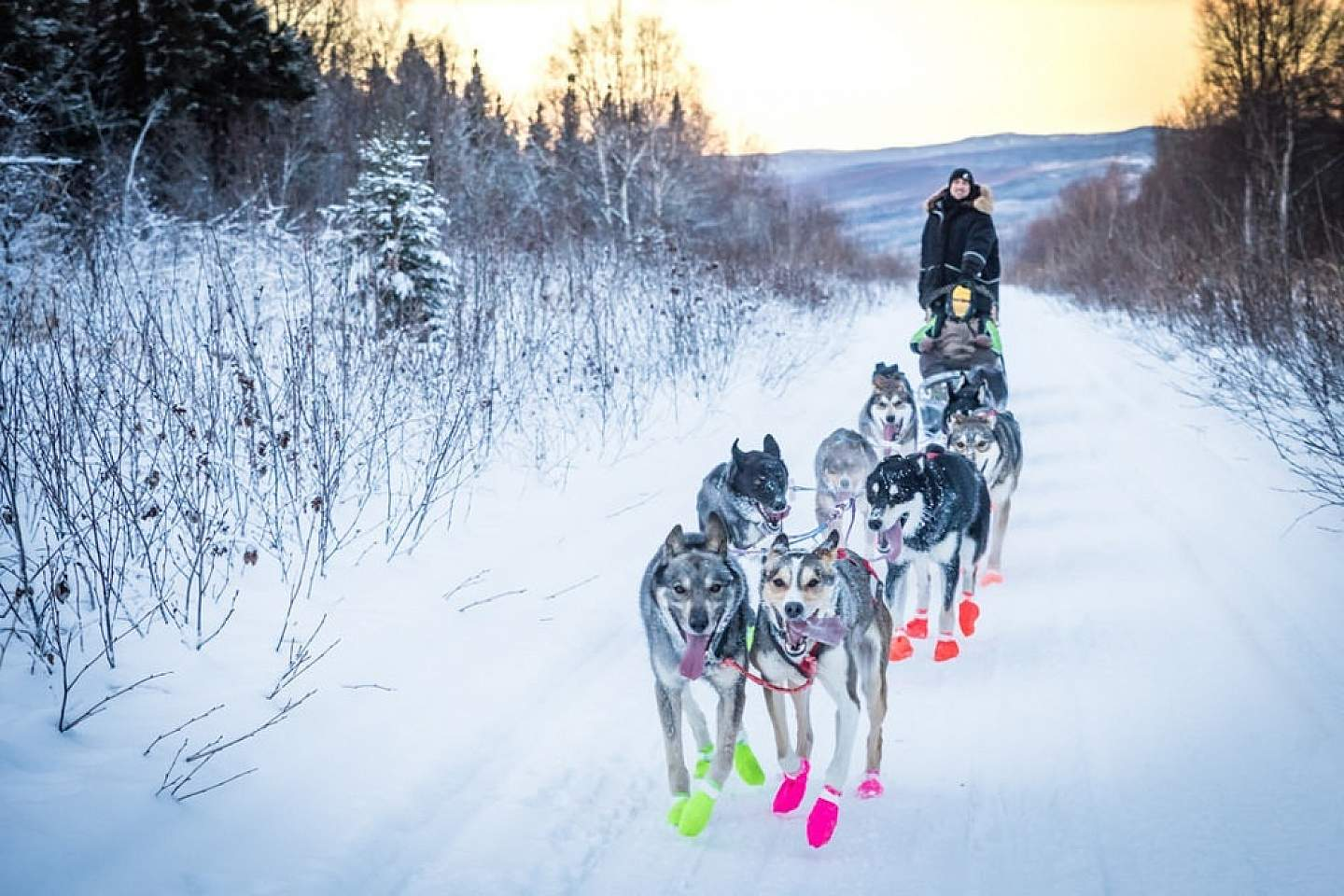 A team of sled dogs races down a winter trail