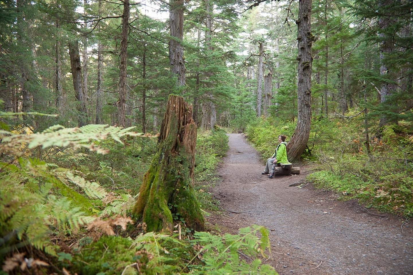 Hike through the northernmost rainforest on the Winner Creek Trail