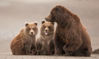 Alaska bear vieiwng toursalaska bear tours pattie walsh Pattie Walsh