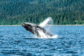 Alaska whale watching tours Juneau Cruise 1
