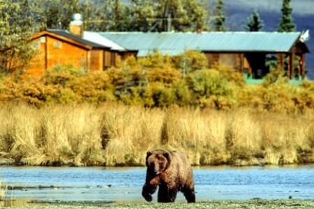 Alaska bear viewing lodges Bear in front of Brooks Lodge copyright Jim Gavin