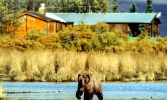 Alaska bear viewing lodges Bear in front of Brooks Lodge copyright Jim Gavin