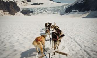Alaska Dog Mushing