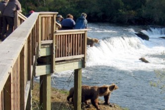 Anchorage Bear Viewing Lodges Thumbnail Brooks Falls Platform copyright Melissa Ackerman