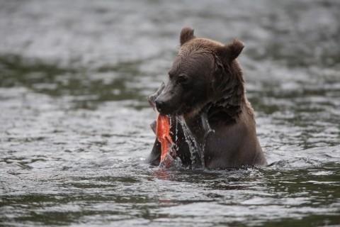 Chugach things to do view wildlife Russian River Falls Russian River Falls 2