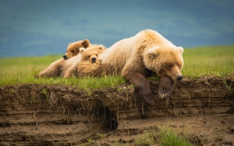 A tour with Emerald Air will give you the exciting experience to see bears in the wild