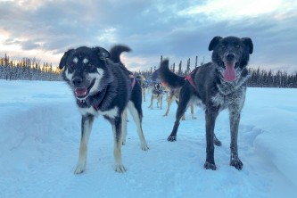 Alaskan Husky Adventures Liz Raines Failor Bowie and Hellhound