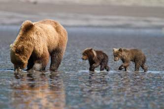 Anchorage bear viewing