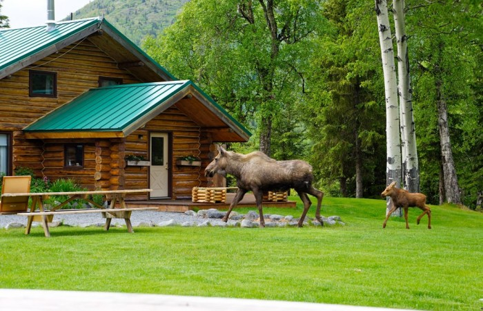 Cooper landing adventure lodges alaska heavenly lodge