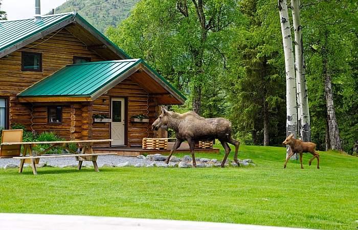 Cooper landing adventure lodges alaska heavenly lodge