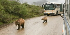 Denali national parks scenic drives Alaska Channel