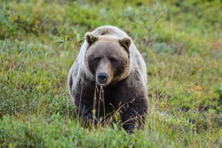 Denali national park trip ideas denali national park nears raewyn poole Raewyn Poole