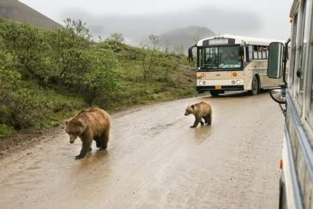 Denali national parks scenic drives Alaska Channel