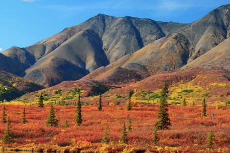 Denali national park Gaylord Spurgeon denali national park gaylord spurgeon
