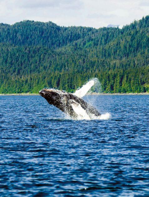 Must See In Alaska Ten Alaska Experiences Not To Miss Alaska Org