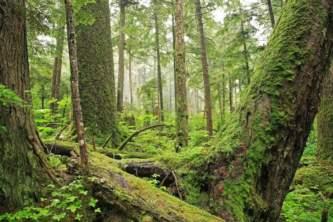 Juneau parks trails Juneau 17