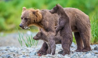 Katmai national park From20 Jess 12 www Jess Taunton com geographic marine expeditions