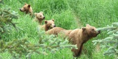 Katmai national park katmai michael crawley Michael Crawley katmai