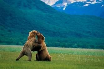 Katmai bear viewing tours AAA019 Modified Alaska Channel