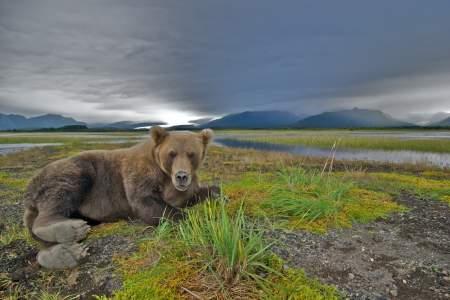 Katmai national park IMG 0904 Version 2 kent fredriksson smokey bay air