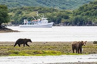 Kodiak bear viewing lodges Island C 9www Jess Taunton com