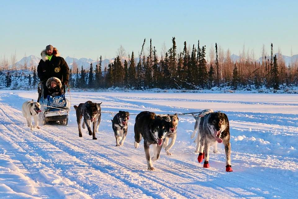 Experience the excitement of riding behind a team of energetic sled dogs on a Dog Mushing Tour