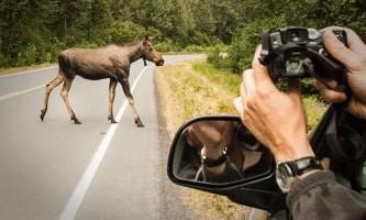 Seward wildlife viewing Alaska Channel