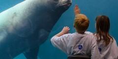 Seward wildlife parks alaska sealife center
