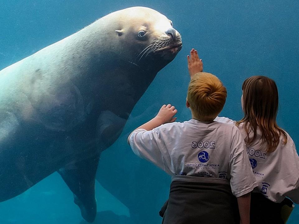 Visit the Alaska SeaLife Center to see Alaska's marine animals up close