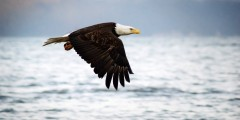 Alaska trip ideas seward Eagle Seward ressurection bay susan lee Susan Lee eagle viewing spots