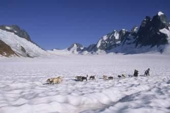 Skagway dog sledding Dog Sledding on the Mendenhall Glacier 6