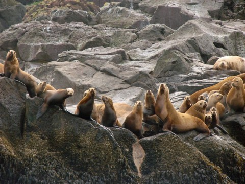 The waters of Unalaska are rich with wildlife viewing opportunities