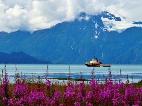 Valdez alaska fireweed