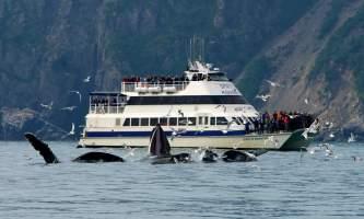 Alaska trip ideas whittier DSC 8367 Version 6 Kenai Fjords National Park Tour