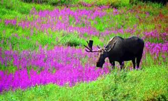 Land Mammals 01 mnp0mn