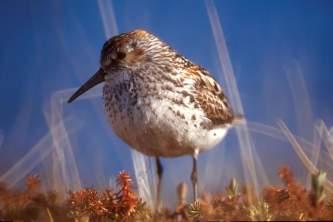 Bird Species 02 mwuiof