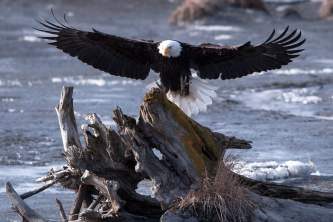 Birding Locations turnagain arm dennis mc afee potters marsh pa9sxd