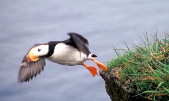 Gull Island 01 mknmmo