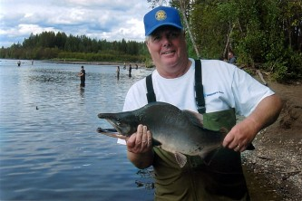 Alaska species fish pink salmon
